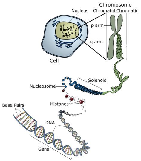 Transcriptional Gene Expression Regulation of Gene Expression